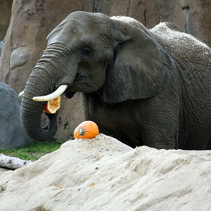 Admission is FREE on Thanksgiving at Cleveland Metroparks Zoo
