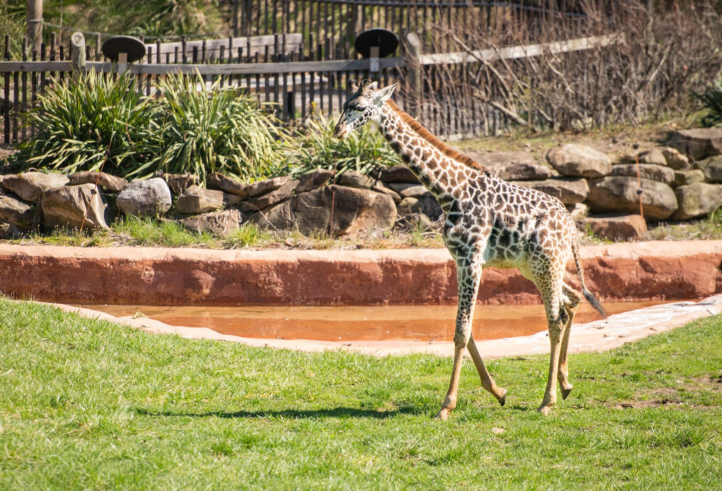 Cleveland Metroparks Zoo to Reopen June 17
