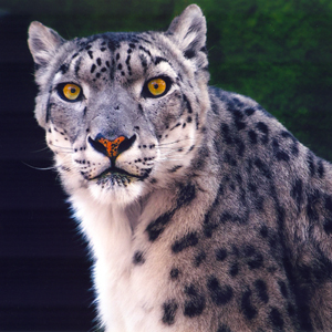 Set your sights on Cleveland Metroparks Zoo
