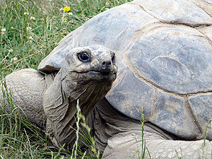 Tortoises Move to Summer Home at Cleveland Metroparks Zoo