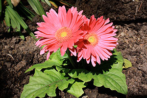 Celebrate Summer at ZooBlooms at Cleveland Metroparks Zoo