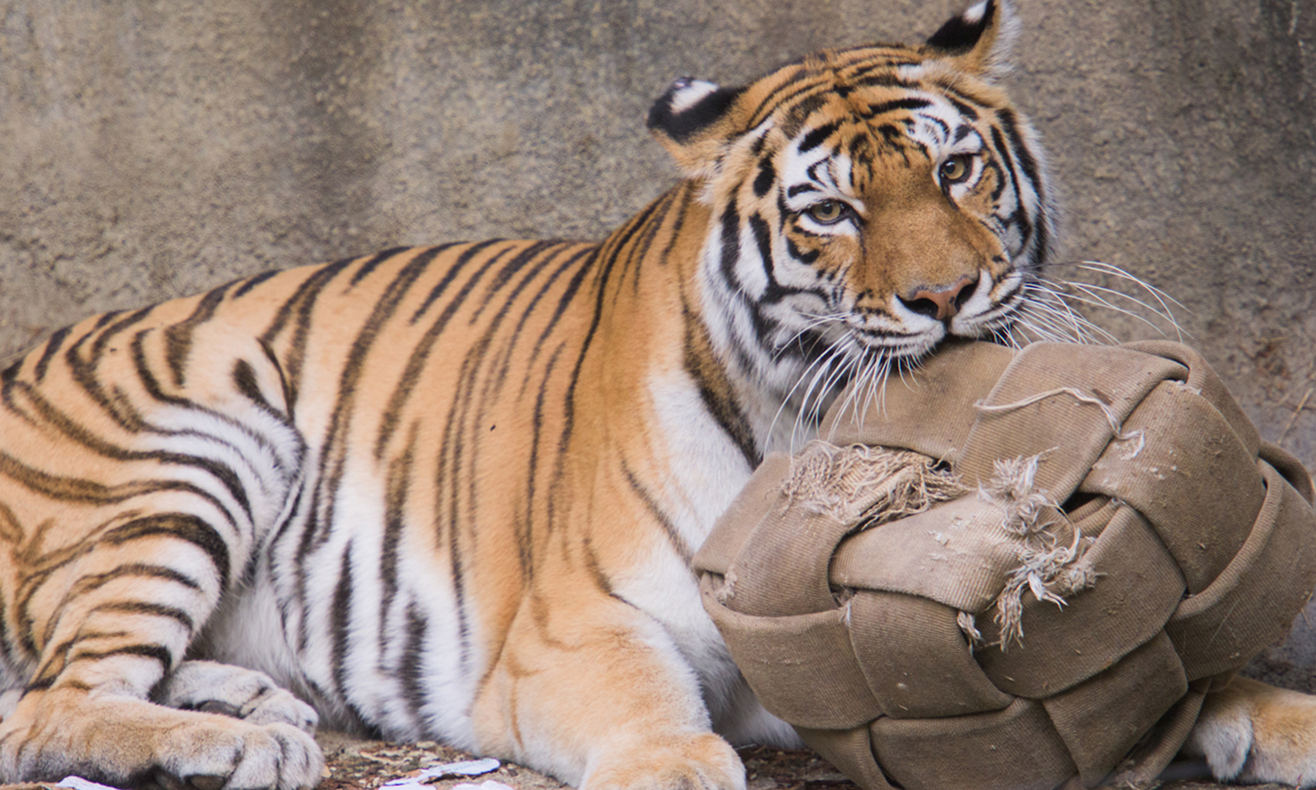 Animal Enrichment and Training