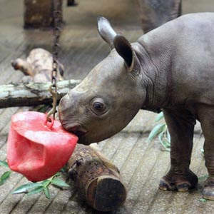 Cleveland Metroparks Zoo announces birth of baby rhino