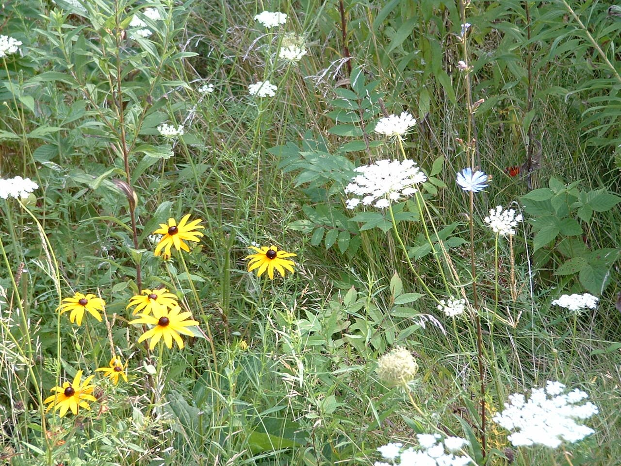 TAKE A WILDFLOWER SELFIE FOR THE TOUR OF WILDFLOWERS IN CLEVELAND METROPARKS
