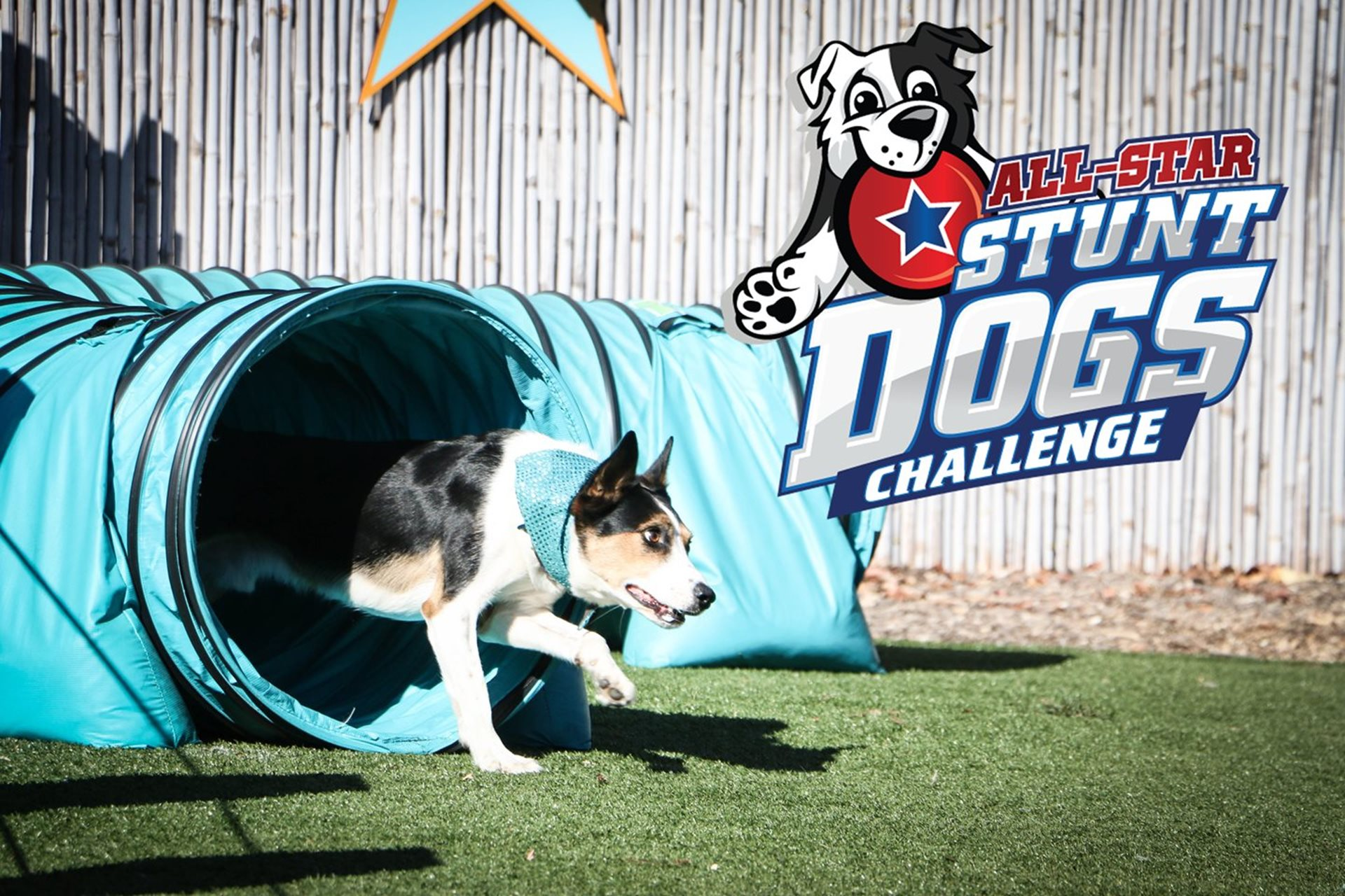 All-Star Stunt Dogs Challenge