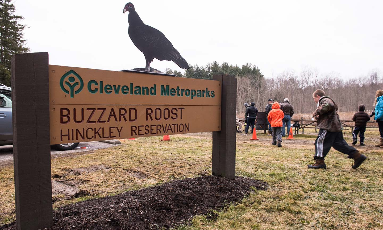 Hinckley reservation northeast ohio parks cleveland metroparks