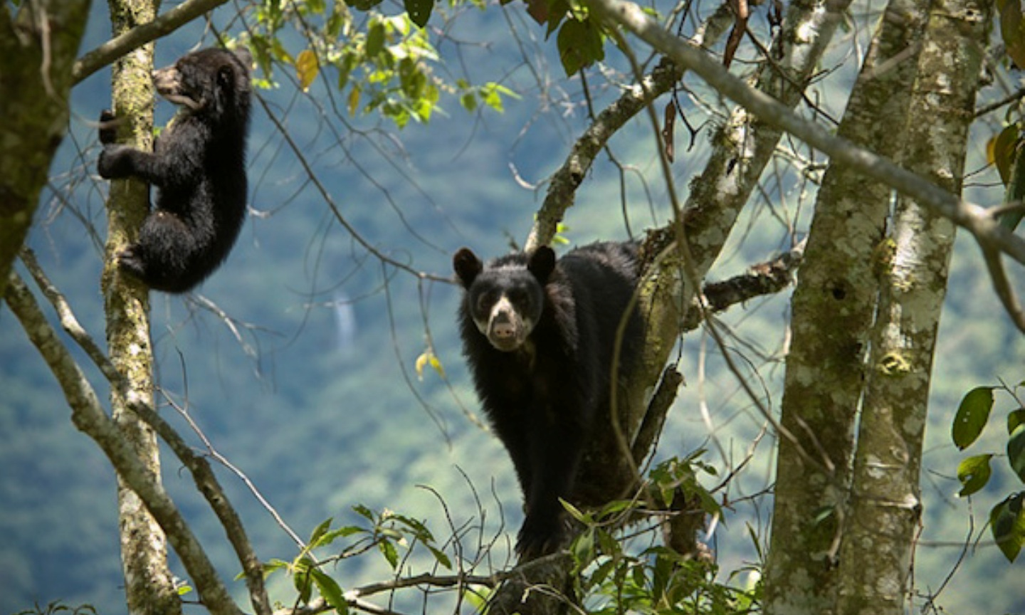 Take Action: Tale of Coffee and Andean Bears