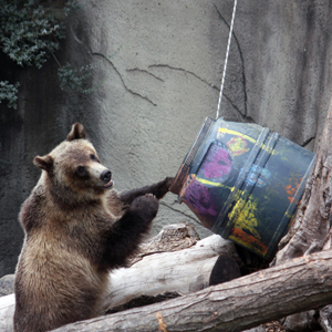 Stuffed bear buddies welcome at Cleveland Metroparks Zoo