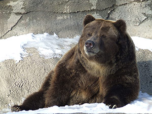 Grizzly bear dies at Cleveland Metroparks Zoo