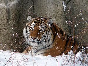 Drop in on December Days at Cleveland Metroparks Zoo