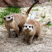 Celebrate the arrival of spring at Cleveland Metroparks Zoo