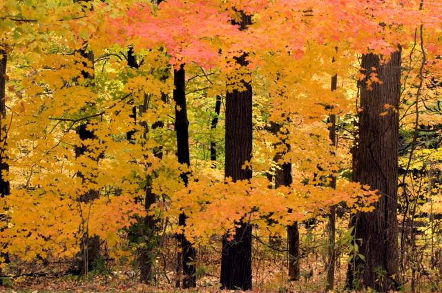 ENJOY AND SHARE PHOTOS OF FALL COLORS IN CLEVELAND METROPARKS