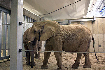 Elephants Return to Cleveland Metroparks Zoo After Two Year Stay in Columbus