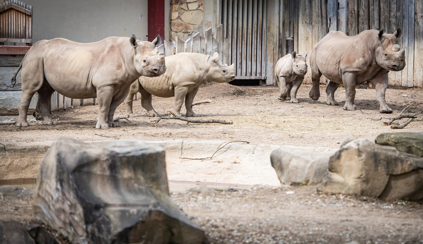 Cleveland Metroparks Zoo Announces Significant Expansion of Rhino Habitat