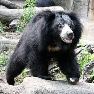Bring your best bear buddy to Teddy Bear Day at Cleveland Metroparks Zoo