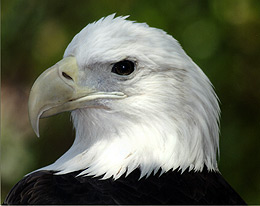 "Make ""Red, White & Zoo"" Part of the Independence Day Holiday Weekend"