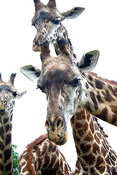 Top Ten Must-Zoo Activities for Summer 2010