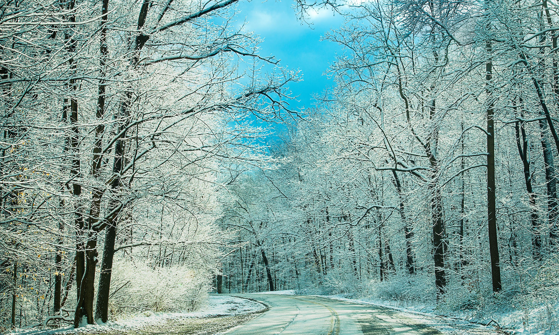 Snow Covered Trees on a Drive Through Brecksville Reservation