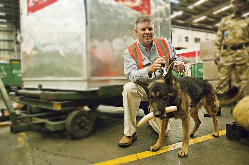 A German Shepherd finds a piece of ivory in a shipping facility