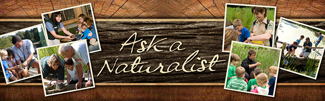 "CLEVELAND METROPARKS DEBUTS ""ASK A NATURALIST"" FEATURE ON WEBSITE"