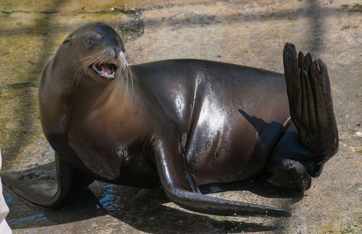 Seal and sea lion training