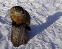 SHADOW OR NO SHADOW? CELEBRATE GROUNDHOG DAY WITH CLEVELAND METROPARKS