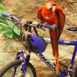 Ride your bike inside Cleveland Metroparks Zoo for the first time at Wild Ride