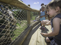 Cleveland Metroparks Zoo opens new Giraffe Encounter