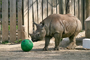 Cleveland Metroparks Zoo Sends Rhino to Oregon Zoo