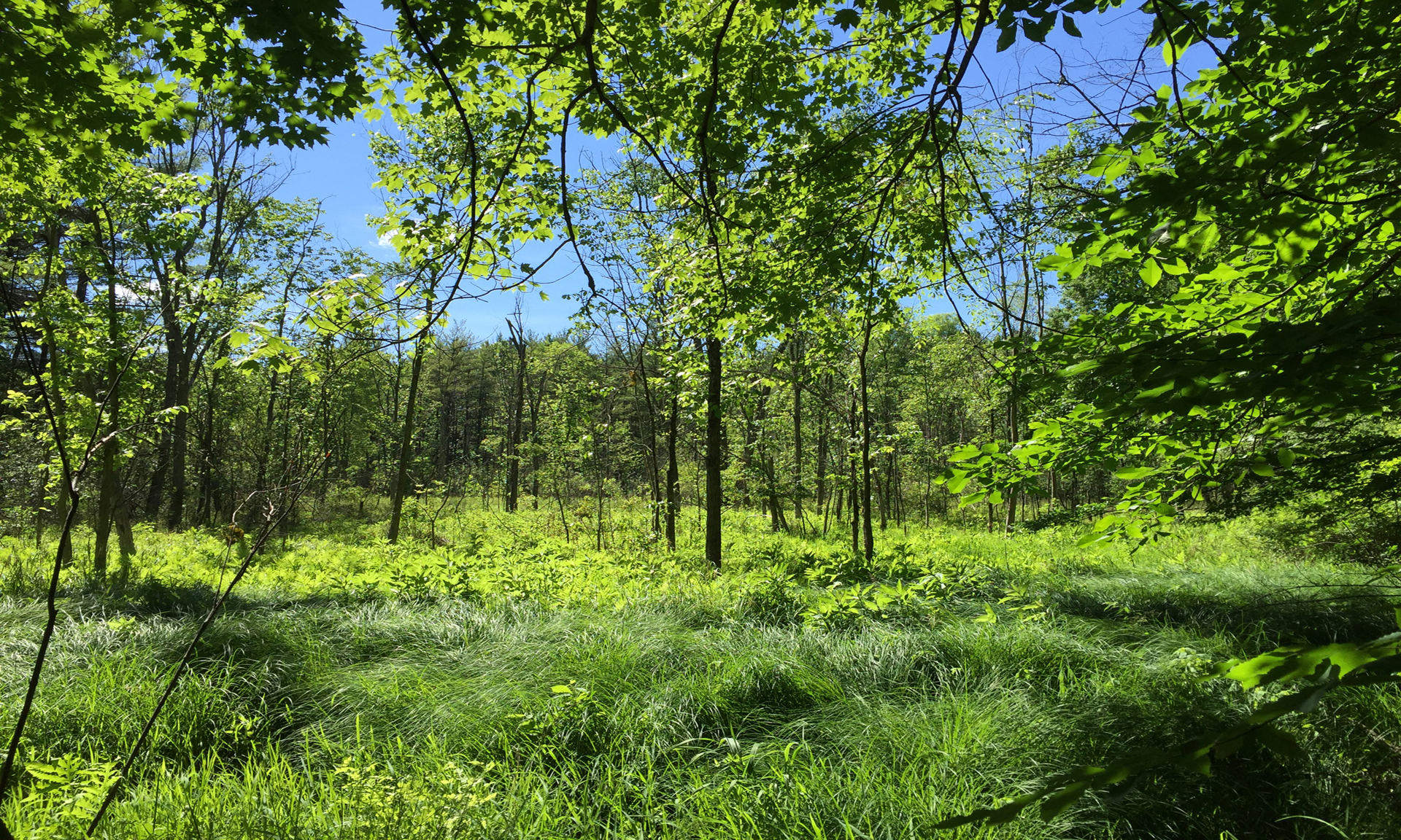 Cleveland Metroparks Awarded More than $4 Million to Acquire, Conserve and Protect 70+ Acre Property