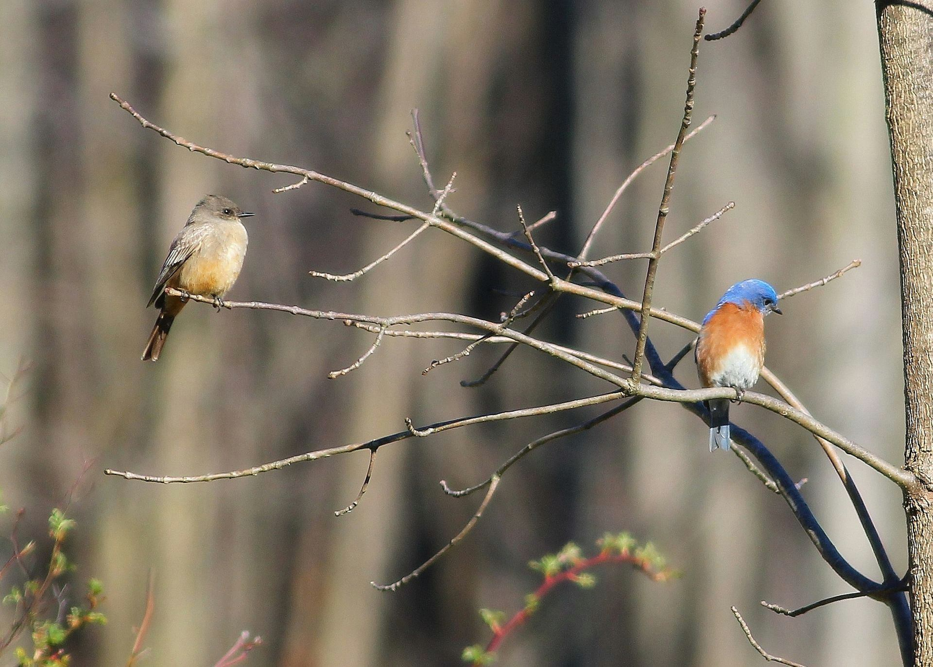Visit bluebird boxes and learn about citizen science projects