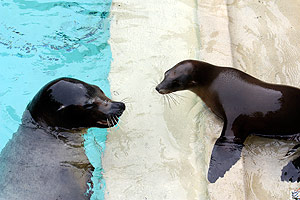 Sea Lion Pair Begins New Life at Cleveland Metroparks Zoo