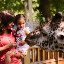 CLEVELAND METROPARKS ZOO ANNOUNCES FREE GIVEAWAYS FOR SUMMER APPRECIATION CELEBRATION, AUGUST 4-15