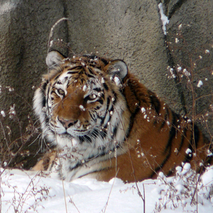 Winter Break Camp returns to Cleveland Metroparks Zoo