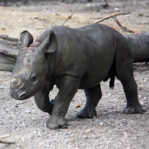 Cleveland Metroparks Zoo announces name of baby rhino