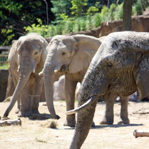 Cleveland Metroparks Zoo breaks 1.3 million visitor mark in 2011