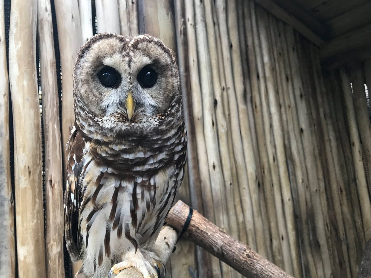 Behind-the-scenes tour of owl aviary