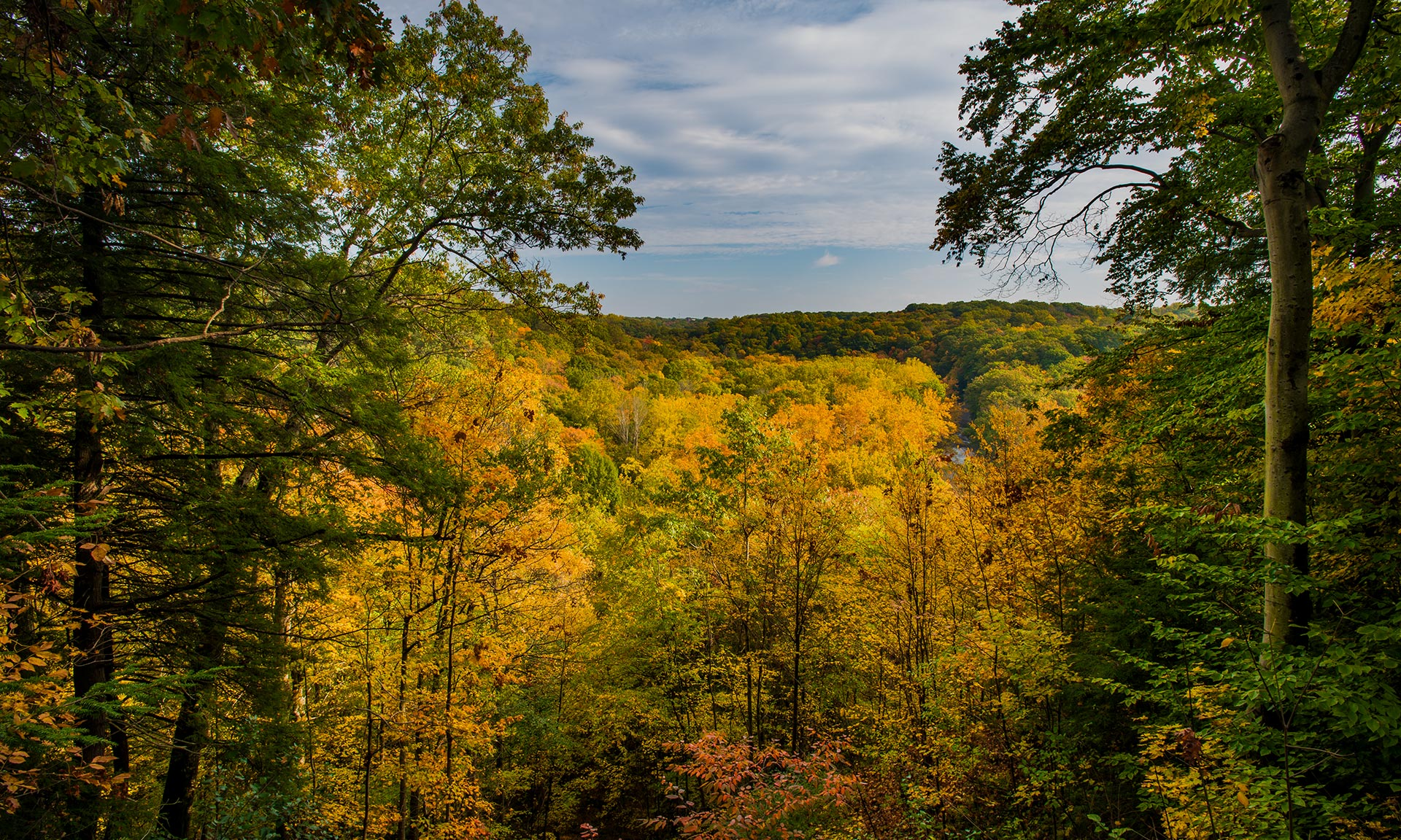 View of Fall Trees from Scenic Overlook at Bedford Reservation