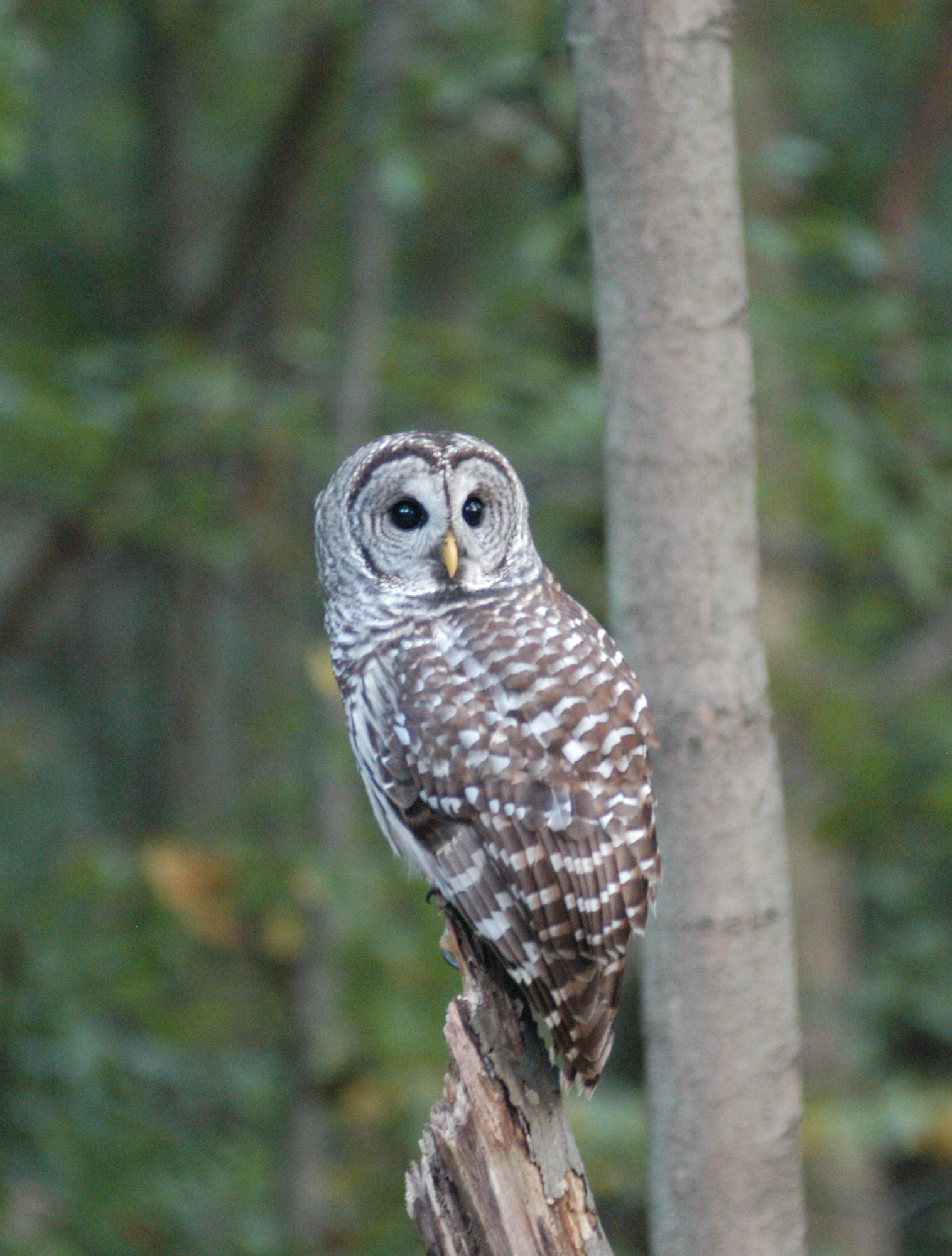 "DISCOVER ""WILD"" NIGHTLIFE AT CLEVELAND METROPARKS NATURE AT NIGHT EVENT"