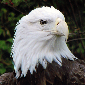 Celebrate Red, White & Zoo on the Fourth at Cleveland Metroparks Zoo