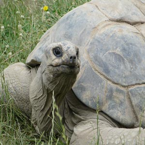Aldabra tortoise, thought to be over 100, dies at Cleveland Metroparks Zoo