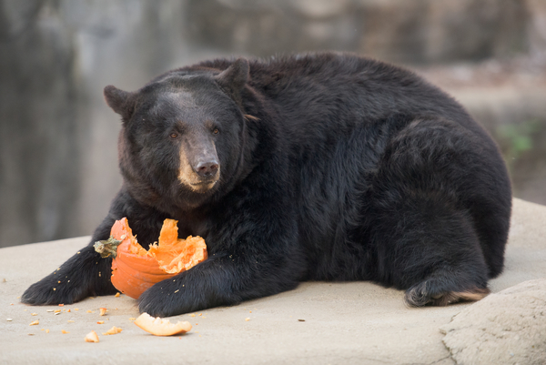 FREE Admission on Thanksgiving Day at Cleveland Metroparks Zoo