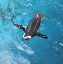 Penguins Are Making A Comeback