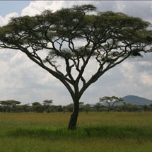 A Bit About Acacia Reservation