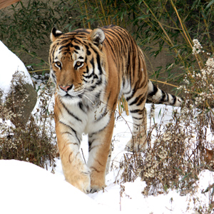 December Days Return at Cleveland Metroparks Zoo