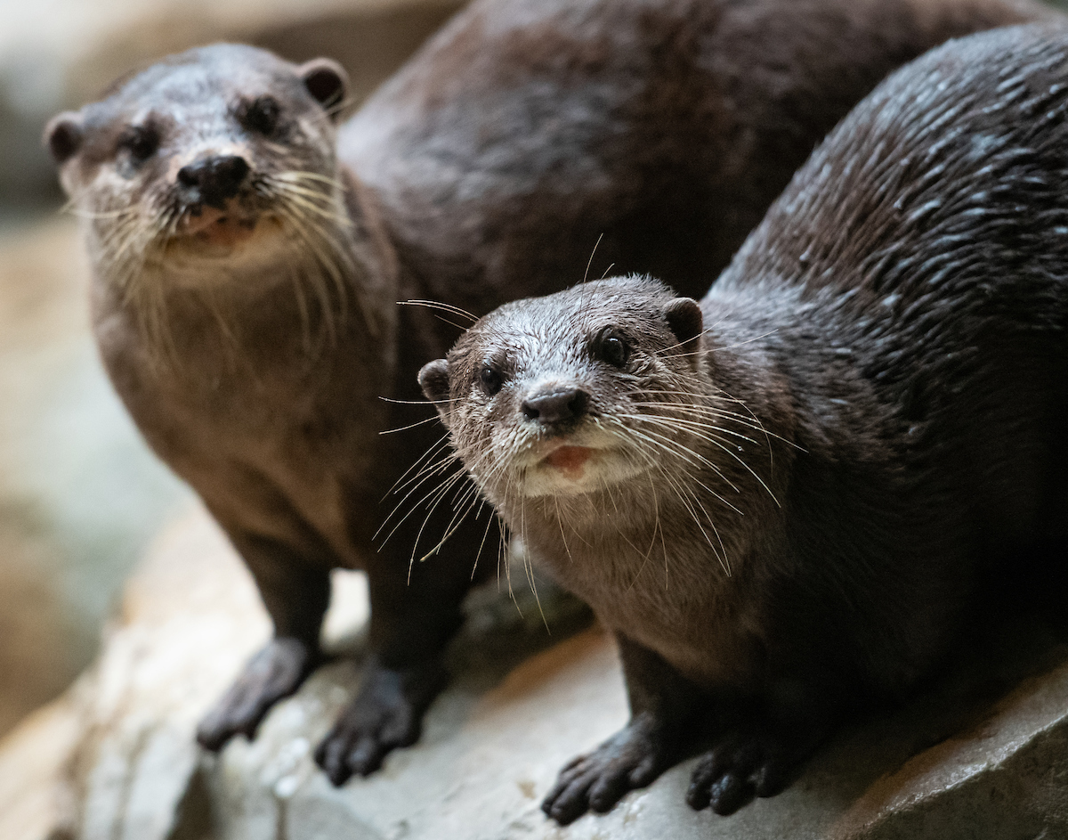 Visit the otters