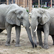 Cleveland Metroparks Zoo marks World Elephant Day with 1,000 messages for Ohio