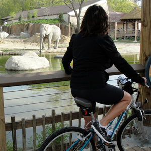 See Cleveland Metroparks Zoo on your bike during Wild Ride