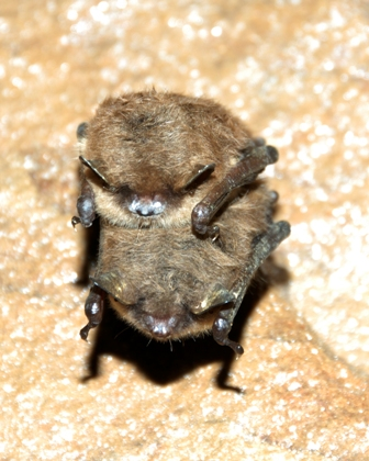 How are the bats doing this year? I know last year they had that nose fungus. Is there anything we can do to help them? Would a bat house help?