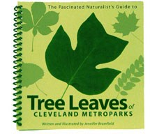 Tree Leaves of Cleveland Metroparks
